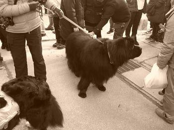 80kの犬.jpg